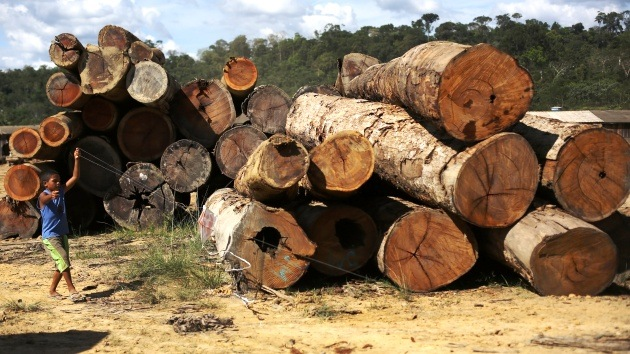 Brasil desmantela la mayor banda criminal de taladores de la selva amazónica