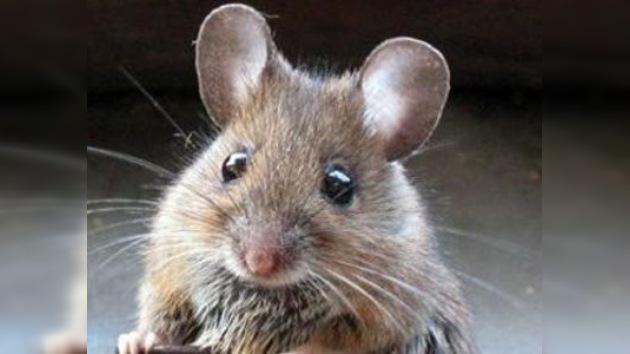 Un austriaco quema su propia casa intentando matar a un ratón