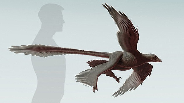 Descubren en China el mayor dinosaurio de cuatro alas
