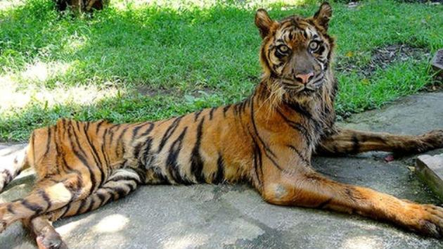 "Clamor en Internet: Cierren el ""Zoo de la Muerte"""