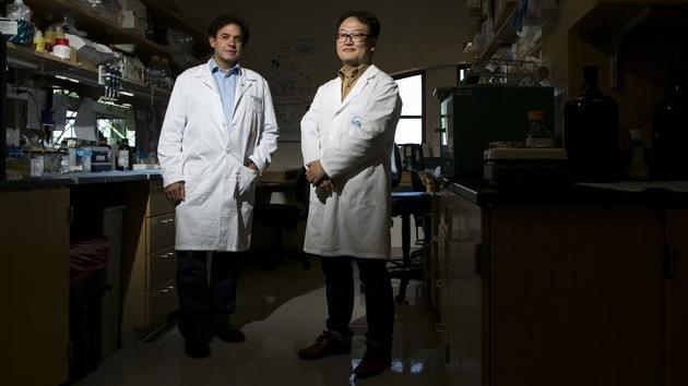 Logran replicar el alzhéimer en una placa de Petri: la clave para probar fármacos