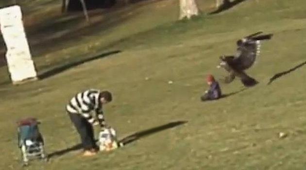 Video: A los niños los trae la cigüeña... ¿y se los lleva el águila?