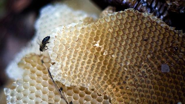 La cura más dulce: La miel fresca de abeja podría ser más efectiva que los antibióticos
