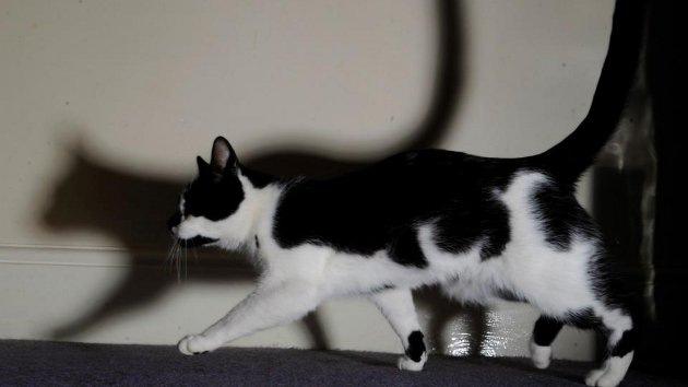 Video: Un gato inglés robó 100 prendas de ropa de su vecindario