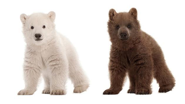 Animales híbridos, posible respuesta a un mundo cambiante