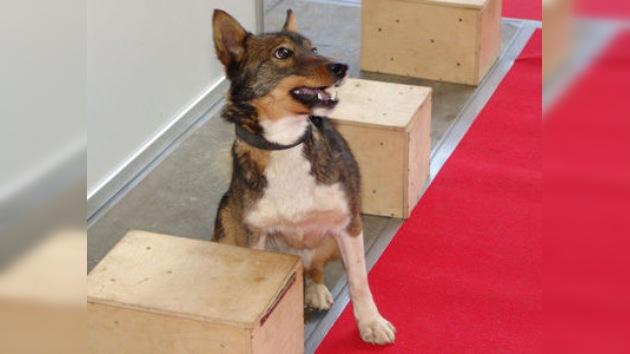 Los perros-chacales rusos como 'elemento de seguridad'