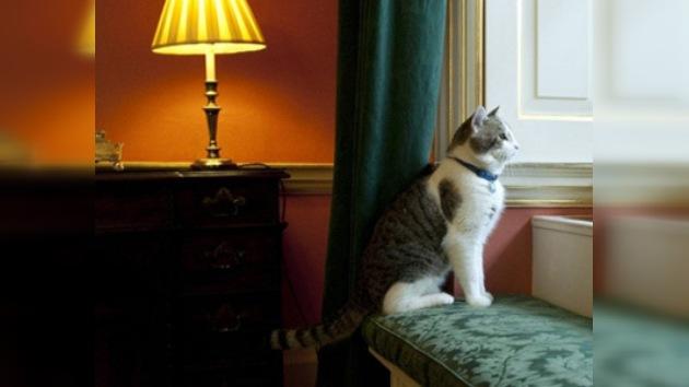 Downing Street 'contrata' a un gato para cazar ratas