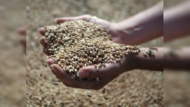 Rusia entrega la segunda partida de trigo gratuito a Managua