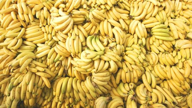 Hongo mortal amenaza con destruir los cultivos mundiales de banana