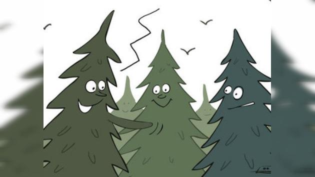 Abetos clonados: futuros imprescindibles de las fiestas navideñas rusas