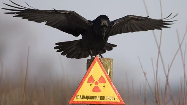 Un ingeniero revela insólitos detalles de su labor de emergencia en Chernóbil
