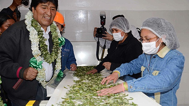 Bolivia inaugura la primera fábrica de procesamiento de coca