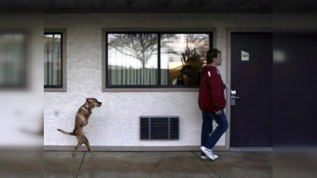 Una perra de dos patas se convierte en sargento del Ejército