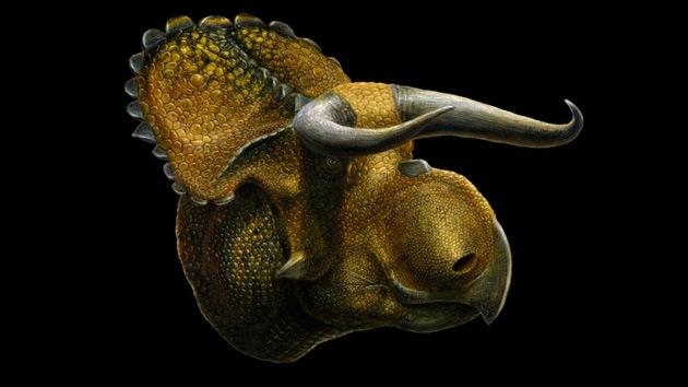 El Nasutoceratops asoma la cabeza: hallan un dinosaurio con pico de loro y astas de toro