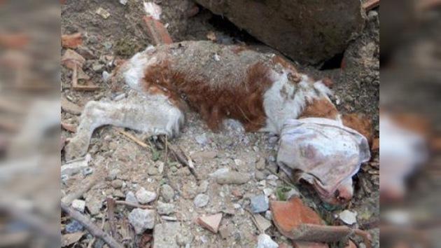 Un perro enterrado vivo en Italia logra sobrevivir