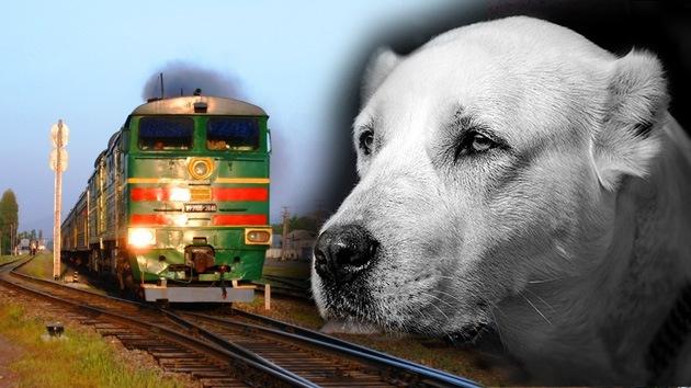 Amor sin límite: Un perro se lanza al paso de un tren y salva la vida de su dueño