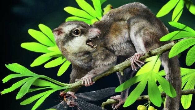 Hallan en China los restos de los posibles ancestros más antiguos de los mamíferos