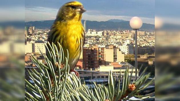 Los pájaros cantan más en las ciudades en respuesta al ruido urbano