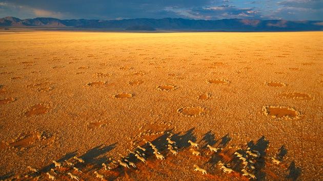 Las 'hadas' eran las termitas: Un biólogo resuelve el misterio de los 'anillos' africanos