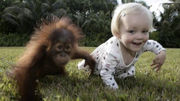 Triste final del 'libro de la selva': Separan a una niña y a una pequeña orangután