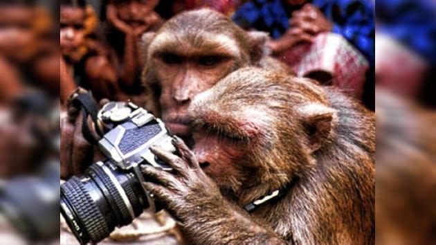 ¿Tengo monos en la cara?: un macaco se fotografía a sí mismo