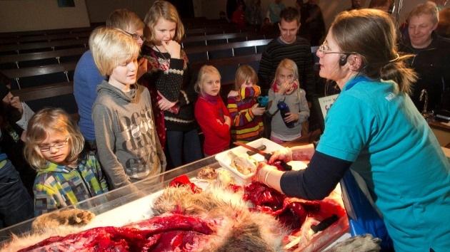 """Dinamarca: Diseccionan a un lobo delante de niños """"con fines educativos"""""""