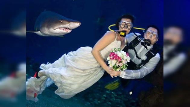 """En Mallorca celebran bodas submarinas con tiburones como """"testigos"""""""