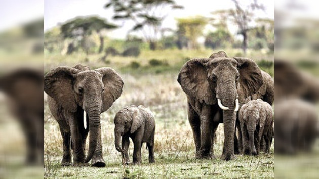 África se rebela contra el 'progreso' para proteger los parques naturales y las especies