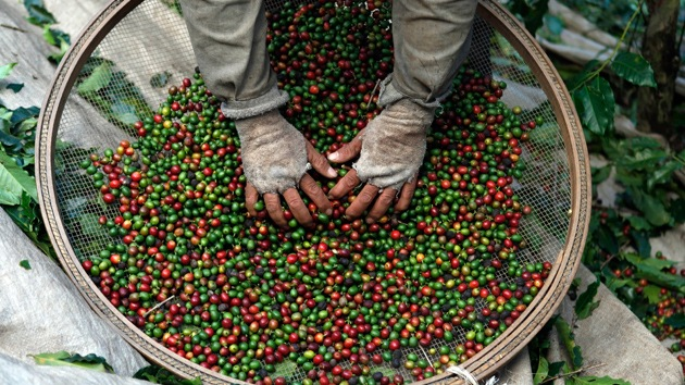 Que no cunda el pánico, pero... el café mundial escasea