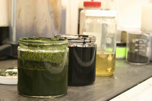 Una nueva tecnología convierte algas en petróleo crudo en minutos