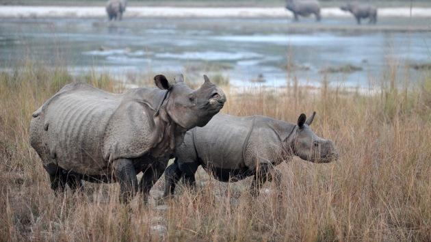 Drones militares custodian a los rinocerontes de Sudáfrica