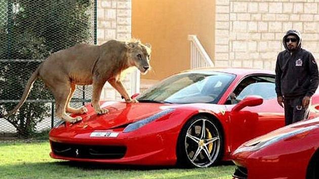 Fotos: Grandes felinos en casa, nueva moda entre los ricos de los Emiratos Árabes