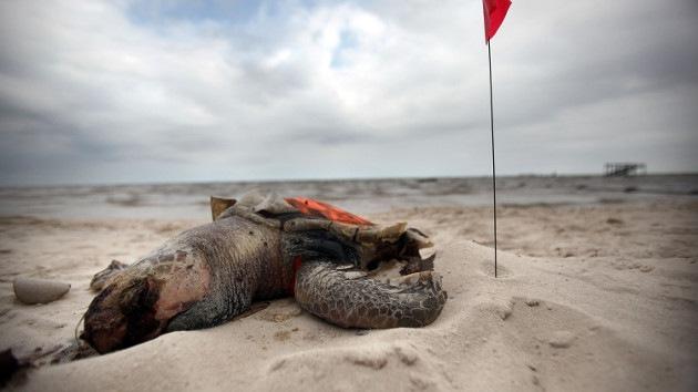 El legado del vertido de BP: peces deformes y personas gravemente enfermas