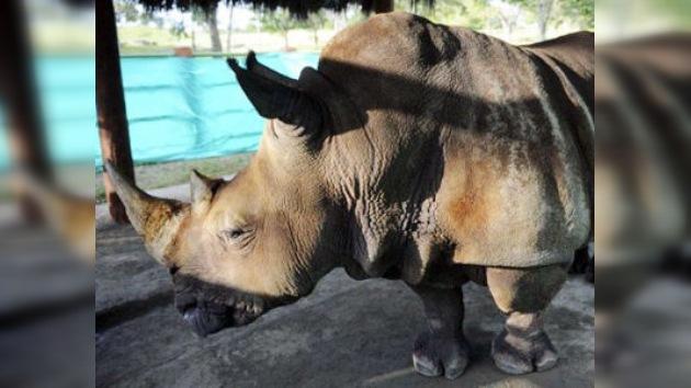 Una hacienda de Pablo Escobar, nuevo hogar de un rinoceronte