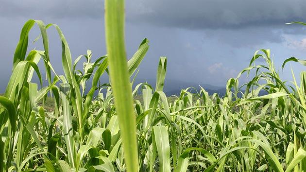 Brasil no se fía de Monsanto y busca prohibir el herbicida Roundup por su alta toxicidad