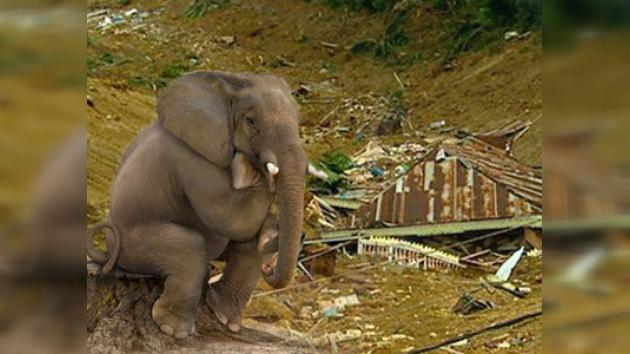 Unos elefantes pisotearon una aldea en India