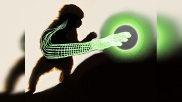 Monos ayudan a ciéntificos en la lucha contra la parálisis