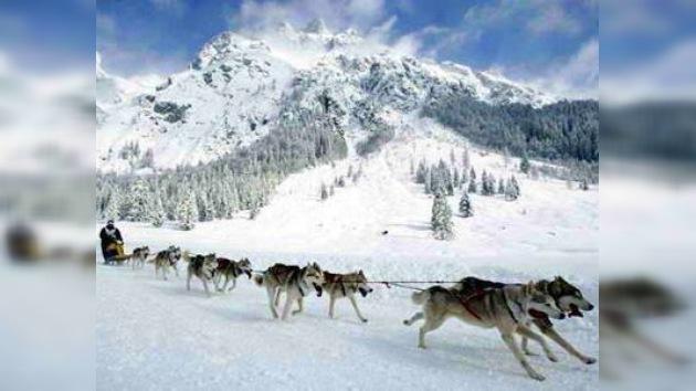 Participantes de carrera de trineos de perros pasarán controles antidopaje