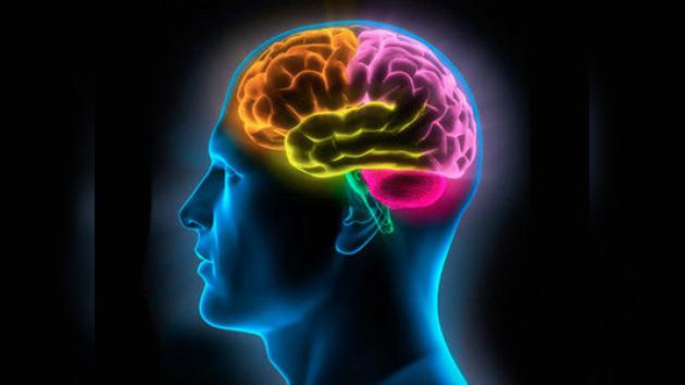 ¿Puede predecirse la drogadicción de los jovenes estudiando el cerebro?
