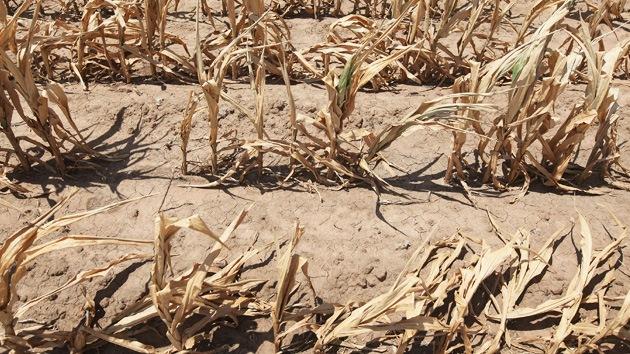 La agricultura de EE.UU. agoniza por la sequía más grande de la historia