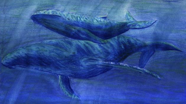 Hallado en un río en EE.UU. un fósil de ballena de 15 millones de años