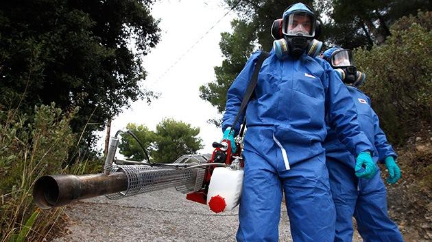 América Latina no tiene anticuerpos para combatir el virus chikungunya
