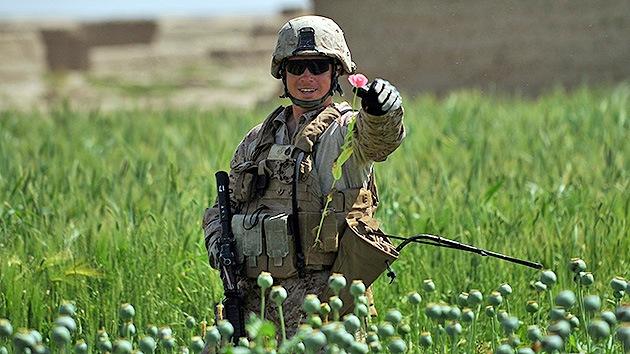 Putin: Las fuerzas internacionales no consiguen erradicar la droga en Afganistán