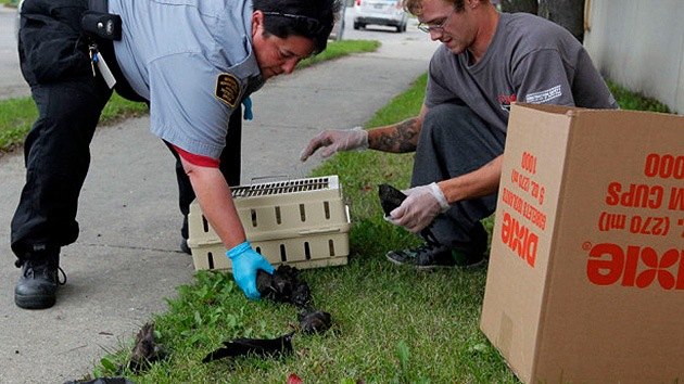 Misteriosa lluvia de pájaros muertos en Canadá