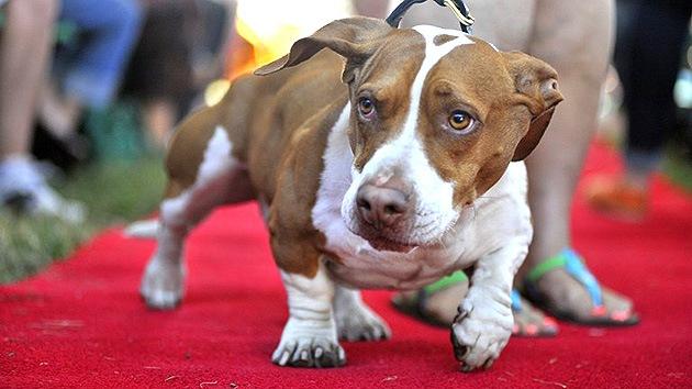 Walle, el perro más feo del mundo