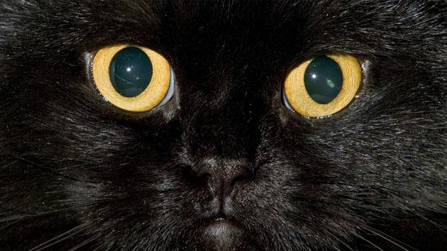 ¿Cómo ven los gatos? Descubra los secretos ocultos de la visión de estos felinos