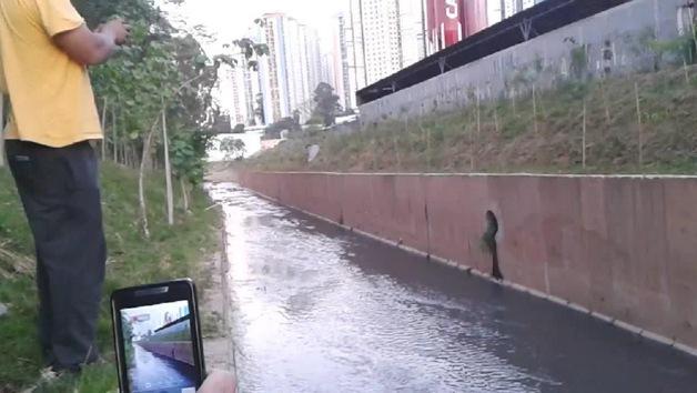 Rescatan a un perro atrapado en un canal