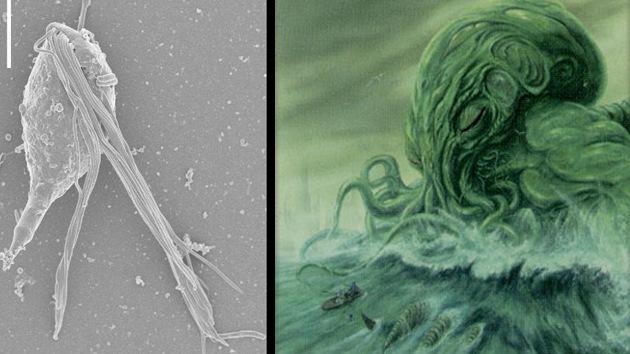 Video: Descubren a 'dos personajes de Lovecraft' en las entrañas de una termita