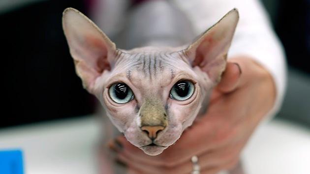 Se registra el primer caso de tuberculosis trasmitida de gato a humano