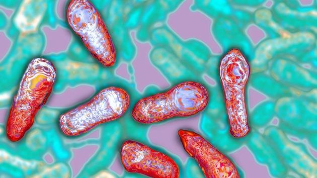 Hallan la toxina más mortal del mundo y mantienen en secreto su secuencia genética